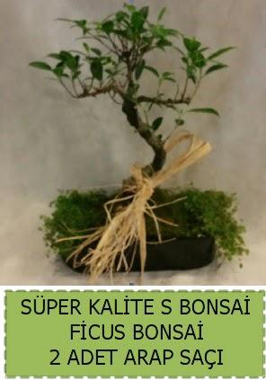 Ficus S Bonsai ve arap saçı  Ardahan çiçekçi telefonları
