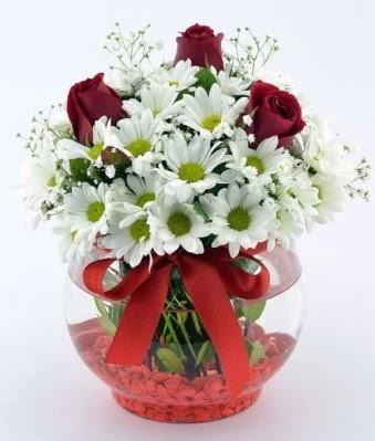 Fanusta 3 Gül ve Papatya  Ardahan internetten çiçek satışı