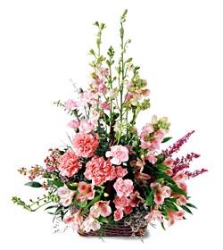 Ardahan ucuz çiçek gönder  mevsim çiçeklerinden özel