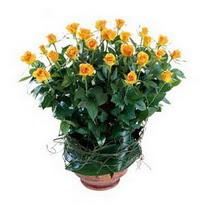 Ardahan cicekciler , cicek siparisi  10 adet sari gül tanzim cam yada mika vazoda çiçek