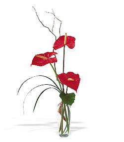 Ardahan çiçek siparişi sitesi  cam yada mika Vazoda 3 adet  antoryum