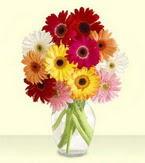 Ardahan çiçek yolla , çiçek gönder , çiçekçi   cam yada mika vazoda 15 özel gerbera
