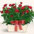 Ardahan İnternetten çiçek siparişi  11 adet kirmizi gül sepette