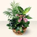 Ardahan çiçek satışı  5 adet canli çiçek sepette