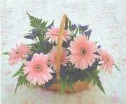 gerbera çiçeklerinde sepet   Ardahan çiçek yolla