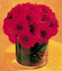 Ardahan ucuz çiçek gönder  23 adet gerbera çiçegi sade ve sik cam içerisinde