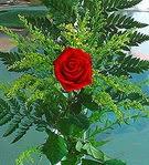 1 adet kirmizi gül buketi   Ardahan çiçek siparişi vermek