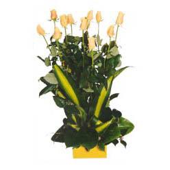 12 adet beyaz gül aranjmani  Ardahan kaliteli taze ve ucuz çiçekler