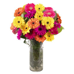 KARISIK GERBERALARDAN CAM VAZO TANZIMI  Ardahan güvenli kaliteli hızlı çiçek
