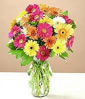 Ardahan çiçek online çiçek siparişi  17 adet karisik gerbera