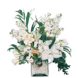 Ardahan internetten çiçek siparişi  sadece beyazlardan olusmus mevsim cam yada mika tanzim