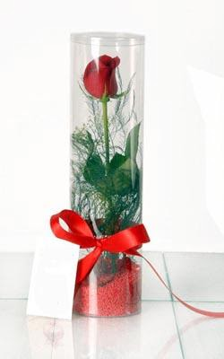 Ardahan çiçek yolla  Silindir vazoda tek kirmizi gül
