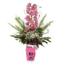 Ardahan hediye çiçek yolla  cam yada mika vazo içerisinde tek dal orkide çiçegi