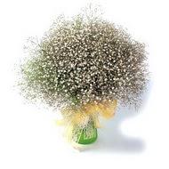 Ardahan çiçek mağazası , çiçekçi adresleri  cam yada mika vazo içerisinde cipsofilya demeti