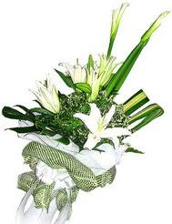 Ardahan güvenli kaliteli hızlı çiçek  3 dal kazablanka çiçegi ve yesillikler