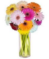 Ardahan internetten çiçek siparişi  Farkli renklerde 15 adet gerbera çiçegi