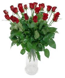 Ardahan çiçekçi telefonları  11 adet kimizi gülün ihtisami cam yada mika vazo modeli