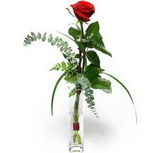 Ardahan 14 şubat sevgililer günü çiçek  Sana deger veriyorum bir adet gül cam yada mika vazoda
