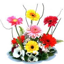 Ardahan hediye çiçek yolla  camda gerbera ve mis kokulu kir çiçekleri
