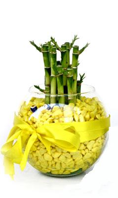 cam fanus içerisinde bambo  Ardahan internetten çiçek satışı