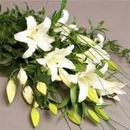 Ardahan güvenli kaliteli hızlı çiçek  3 adet kazablanka çiçegi