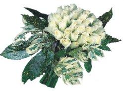 Ardahan internetten çiçek siparişi  9 Beyaz gül Özel kisiler için