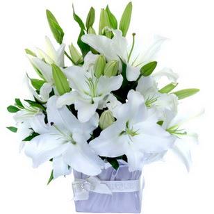 Ardahan çiçek yolla  2 dal cazablanca vazo çiçeği