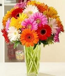 Ardahan çiçek servisi , çiçekçi adresleri  15 adet gerbera çiçek vazosu