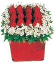 Ardahan çiçek gönderme  Kare cam yada mika içinde kirmizi güller - anneler günü seçimi özel çiçek