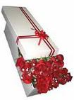 Ardahan çiçekçi telefonları  11 adet 1.kalite magnum güller