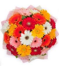 15 adet renkli gerbera buketi  Ardahan yurtiçi ve yurtdışı çiçek siparişi