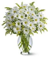 Vazo içerisinde beyaz krizantem çiçekleri  Ardahan çiçekçi mağazası
