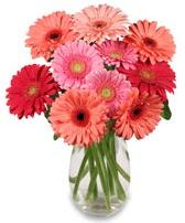 vazo içerisinde 13 adet gerbera çiçeği  Ardahan çiçek siparişi sitesi