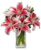 Vazo içerisinde 5 dal kazablanka çiçeği  Ardahan cicekciler , cicek siparisi
