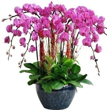 9 dallı mor orkide  Ardahan 14 şubat sevgililer günü çiçek