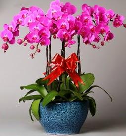 7 dallı mor orkide  Ardahan çiçek online çiçek siparişi