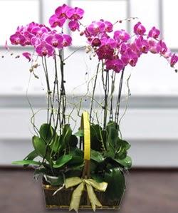 4 dallı mor orkide  Ardahan güvenli kaliteli hızlı çiçek
