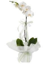 1 dal beyaz orkide çiçeği  Ardahan çiçek siparişi vermek