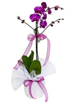 Tek dallı mor orkide  Ardahan çiçekçi telefonları