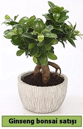 Ginseng bonsai japon ağacı satışı  Ardahan çiçekçi telefonları
