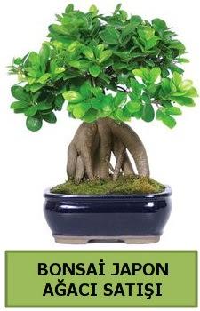 Bonsai japon ağacı satışı  Ardahan çiçek satışı