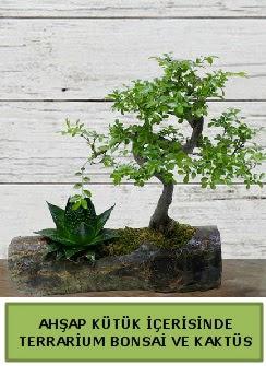 Ahşap kütük bonsai kaktüs teraryum  Ardahan internetten çiçek siparişi