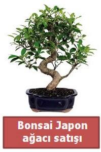 Japon ağacı bonsai satışı  Ardahan çiçek siparişi sitesi