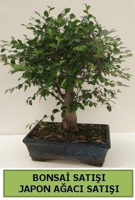 Minyatür bonsai japon ağacı satışı  Ardahan çiçek gönderme sitemiz güvenlidir