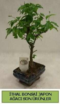 İthal bonsai japon ağacı bitkisi  Ardahan hediye sevgilime hediye çiçek