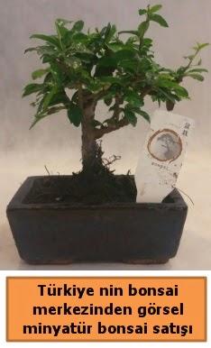 Japon ağacı bonsai satışı ithal görsel  Ardahan çiçek yolla