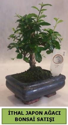 İthal japon ağacı bonsai bitkisi satışı  Ardahan çiçekçi telefonları