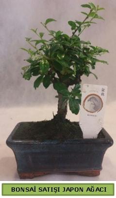 Minyatür bonsai ağacı satışı  Ardahan çiçek gönderme