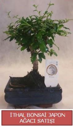 İthal küçük boy minyatür bonsai ağaç bitkisi  Ardahan çiçekçi telefonları