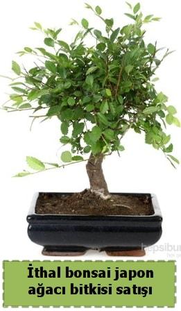 İthal bonsai saksı çiçeği Japon ağacı satışı  Ardahan İnternetten çiçek siparişi
